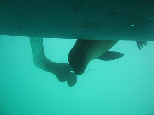 Swimming under the boat