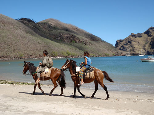 Horses in Daniel's Bay
