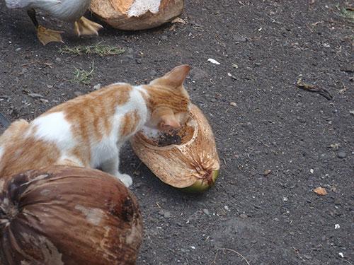 Kittens like coconut
