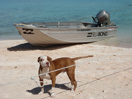Dog w/ the Billabong boat