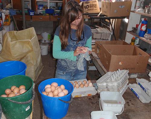 Lara sorts eggs