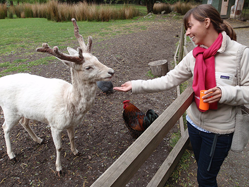 Lara feeds the fallow deer