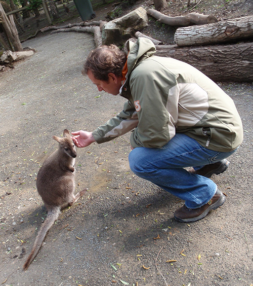 Jason gives a Willowbank wallaby a good scratch