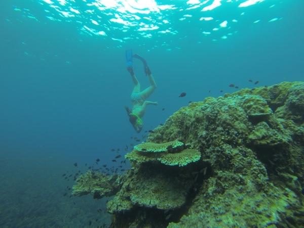 Snorkeling Redang Island